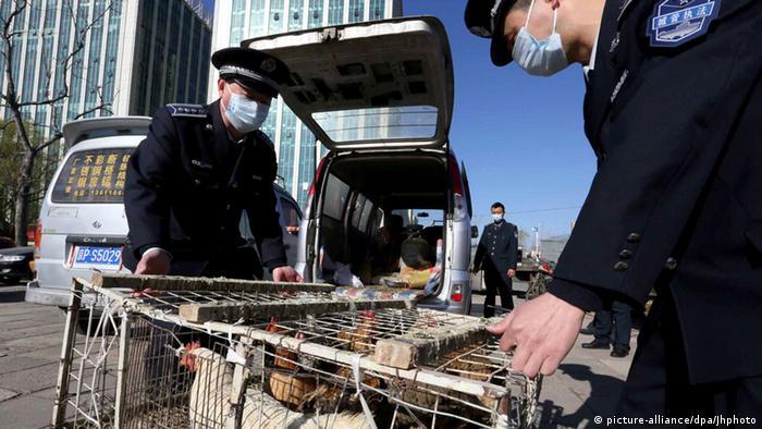 禽流感爆发:北京限制家禽销售