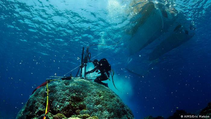 Wissenschaftler entnimmt einer tropischen Koralle eine Probe unter Wasser (Foto: AIMS/Eric Matson).