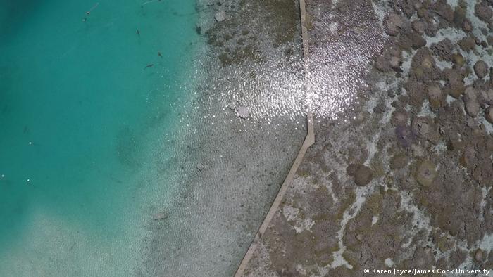 Heron Island sharks