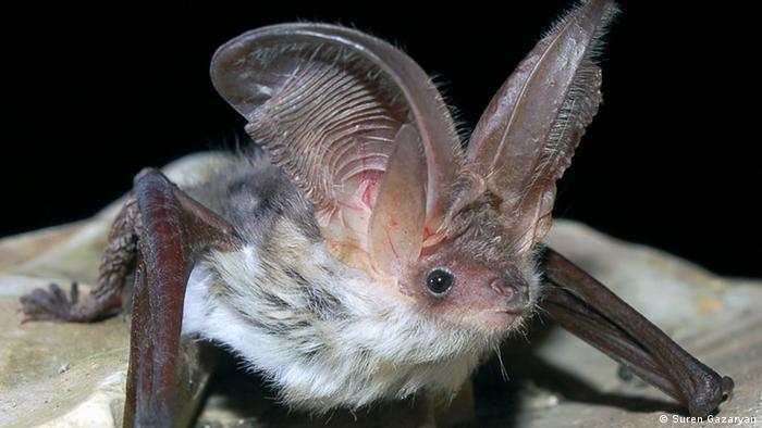 Fledermäuse International Bat Night 2016