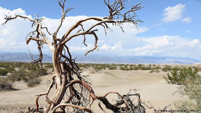 USA Vertrockneter Baum im Death-Valley-Nationalpark (picture-alliance/dpa/C. Melzer)