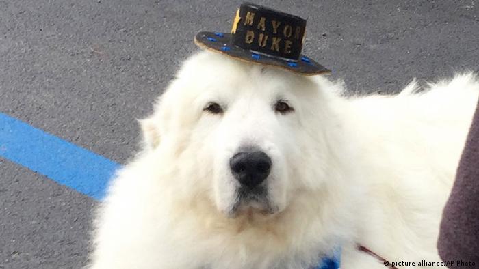 USA Hund Duke geht in dritte Amtszeit als Bürgermeister