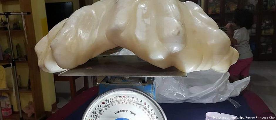Pérola de 34 quilos passou uma década escondida em baixo da cama do pescador que a encontrou