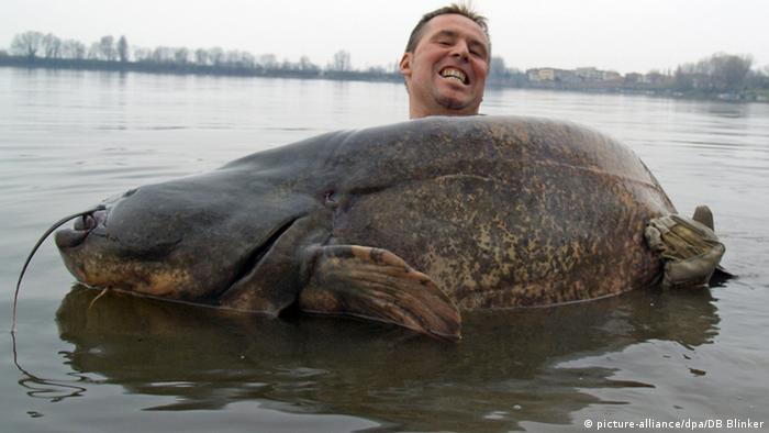У боротьбі з корупцією українцям поки що так і не вдалося піймати велику рибу
