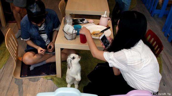 China Die erste Kaninchen Cafe in Hong Kong