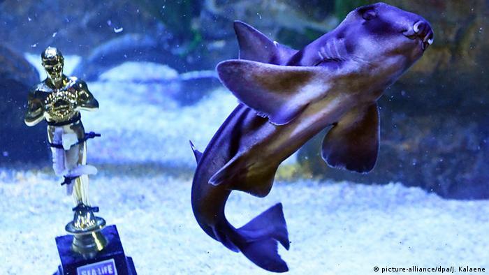 Бычья акула в океанариуме в Берлине