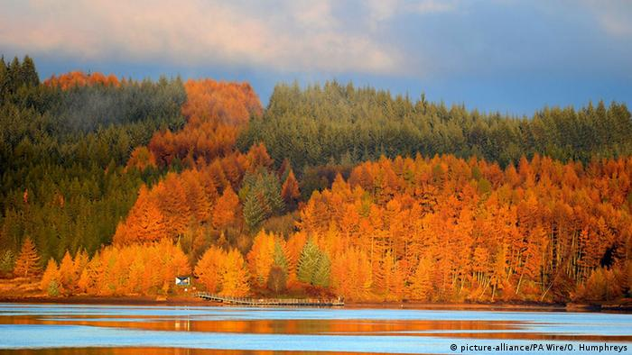 Trees glow in the Autumn colours as the sun rises over Kielder Water in Northumberland (Photo: picture-alliance/PA Wire/O. Humphreys)