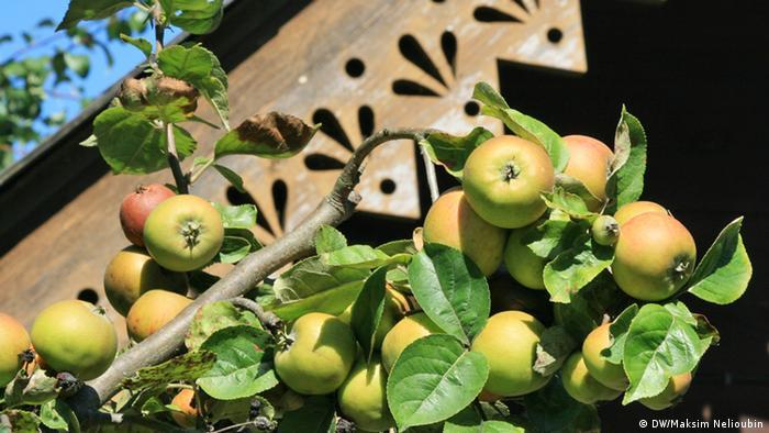 Александровские яблоки