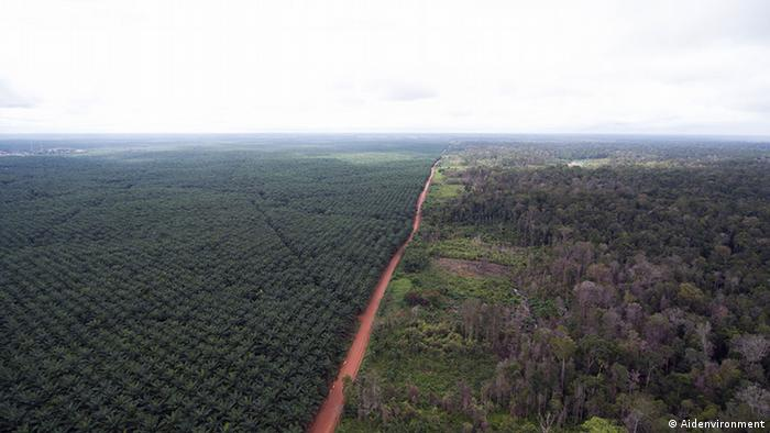 Oil palm monoculture in Papua (Photo: Aidenvironment)
