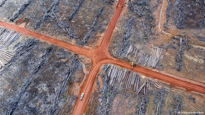Deforestation near Merauke, West Papua (Photo: Aidenvironment)