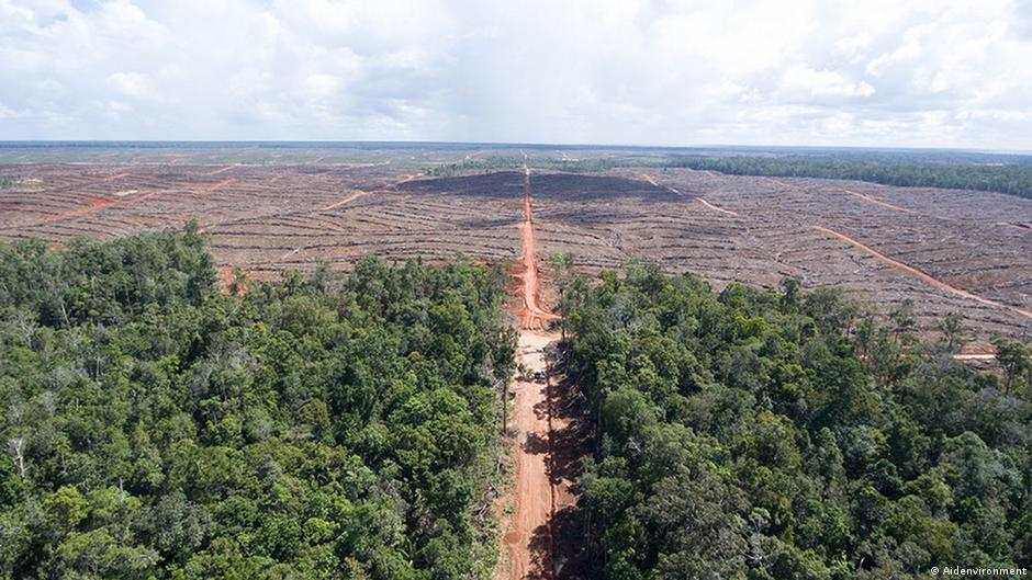 palm oil poverty fighter or environmental The local impacts of oil palm expansion  2 social and environmental impacts of oil palm plantations in malaysia 1  the incidence of poverty among oil palm .