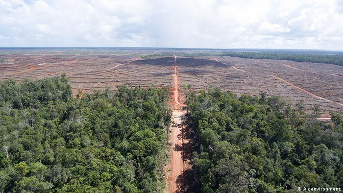 Trees cut down to make way for an oil palm concession