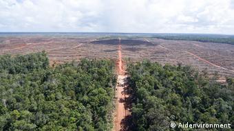 Papua Ölpalmen Abholzung (Aidenvironment)