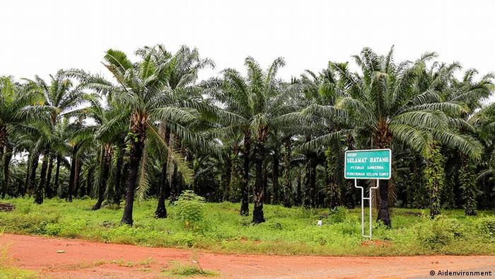 Oil palms, Papua (Photo: Aidenvironment)