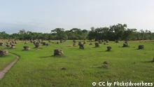 Mutmaßliche Aufnahme des Senegal Dindéfelo National Park