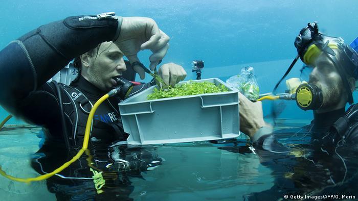 Italien Ligurien Noli Gemüseanbau unter dem Meer (Getty Images/AFP/O. Morin)