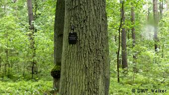 Ліс-цвинтар під Берліном