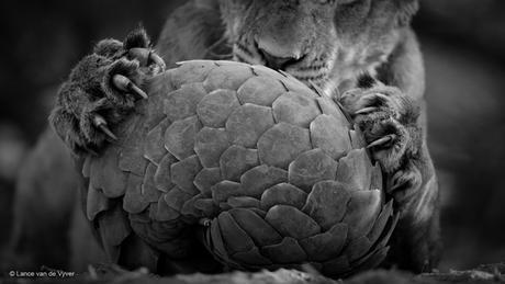 Wildlife Fotografen 2016