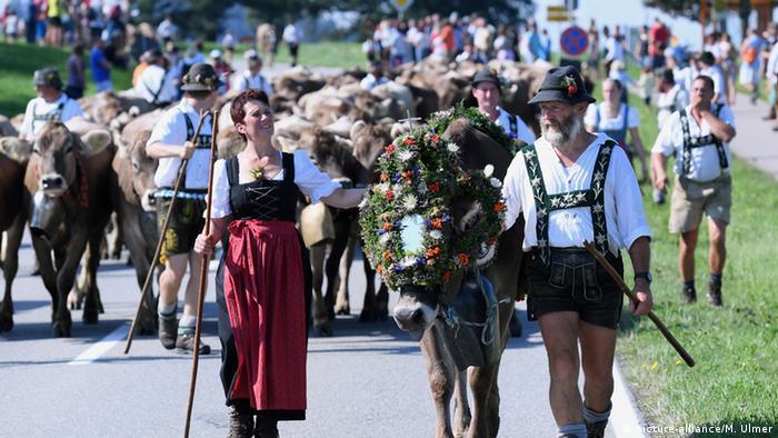 Deutschland Allgäu Viehwirtschaft Viehabtrieb (picture-alliance/M. Ulmer)