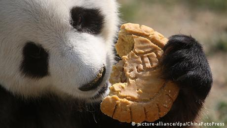 Shanghai Moon Cakes Mondfest Pandabär Panda