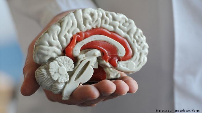 Symbolbild Modell des menschlichen Gehirns