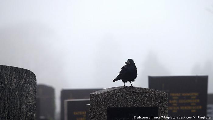 Krähe auf einem Grabstein an Allerheiligen