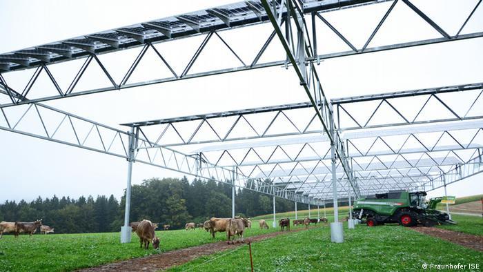 Pilotanlage für Agrophotovoltaik am Bodensee. Auf einem Feld steht ein Solaranlage in fünf Meter höhe. Darunter weiden Kühe und steht ein Mähdrescher. Foto: Fraunhofer ISE