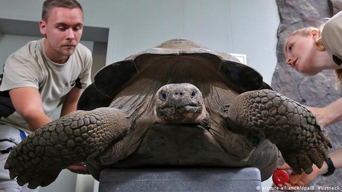 CIENCIA Y ECOLOGÍA:  Galápagos: recuperan tortuga gigante que se creía extinta