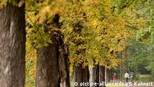 Bildergalerie Deutschland Herbst 2016 +++ Spaziergänger gehen am 19.09.2016 in Moritzburg bei Dresden (Sachsen) eine Allee entlang. +++ (C) picture-alliance/dpa/S. Kahnert