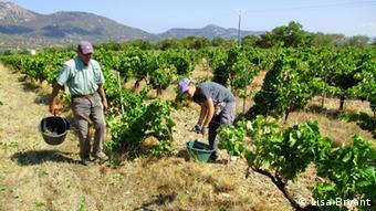 A vineyard on Corsica (c) Lisa Bryant - via Sonya Angelica Diehn