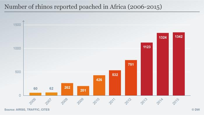 Infografik Rhinos poached in Africa