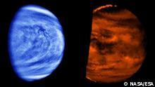 Venus Bild 2