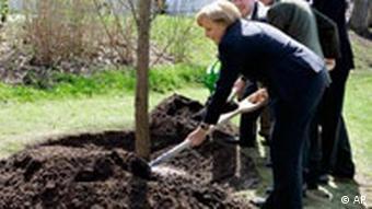 Деревья сажает и канцлер Германии Ангела Меркель