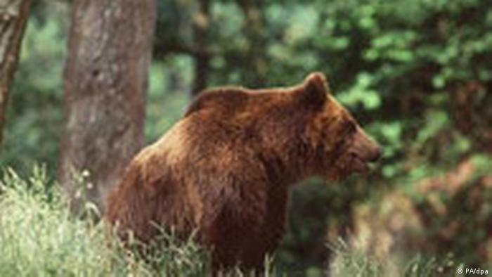 Brown Bear (PA/dpa)