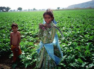 庄稼地里的印度童工