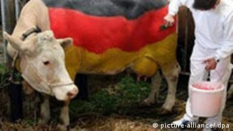 WM 2006 - Kuh in Nationalfarben