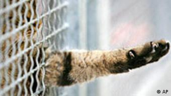 A cat stretches its paw through a metal fence in an animal shelter