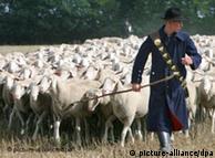 Ovce namijenjene za žrtvovanje na Kurban bajram žive isključivo izvan štale i hrane se prirodnom hranom