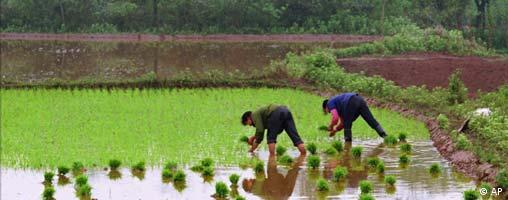 Two Chinese women plant rice in a paddy in their village near Wuhan, in central China's Hubei province April 29, 1995. Women are playing an increasingly important role in agriculture, as millions of men leave their farms to search for better paying work in the cities. (AP Photo/Greg Baker)
