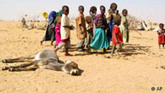 Sudanese refugee children walk past a dead donkey in the desert outside Tine in eastern Chad bordering western Sudan