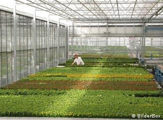 The Netherlands has 100 million square meters of greenhouses
