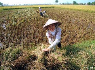 Many Vietnamese women marry foreigners to escape poverty