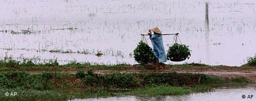 It is sometimes poverty in Vietnam and Cambodia that convinces women to marry foreign men