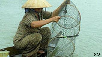 Vietnamesiche Frau zieht Fischernetz aus dem Wasser