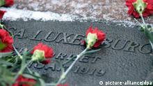 Zahlreiche rote Nelken liegen am 13.1.2002 auf dem Berliner Friedhof in Berlin-Friedrichsfelde auf dem Grabstein von Rosa Luxemburg. Mehrere zehntausend Menschen gedachten der vor 83 Jahren ermordeten Sozialistenführer Rosa Luxemburg und Karl Liebknecht. Seit dem Morgen strömten Sympathisanten jeden Alters zur Gedenkstätte in Berlin-Friedrichsfelde. Die PDS sprach von 100000 Teilnehmern, die Polizei lediglich von mehr als 50000. Am Morgen hatten PDS-Spitzenpolitiker, darunter der designierte Wirtschaftssenator Gysi, am Gedenkstein einen Kranz niedergelegt. Luxemburg und Liebknecht waren 1919 von Freikorpssoldaten umgebracht worden. Zwei Wochen vor ihrem gewaltsamen Tod hatten beide als einstige Sozialdemokraten die Kommunistische Partei Deutschlands (KPD) gegründet.