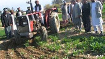 Afghanistan, Mohnfeld wird zerstört