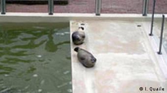 دوفُک در باغوحش هانوفر