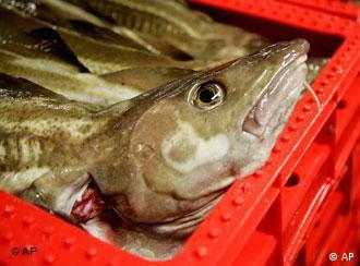 El estado mundial de la pesca.