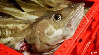 BdT Fischindustrie Bilanz