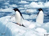 Pingüinos en el Polo Sur.